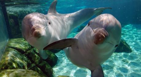 """""""Salvemos a los Delfines"""", su<br/> hogar es el océano y no el cautiverio"""