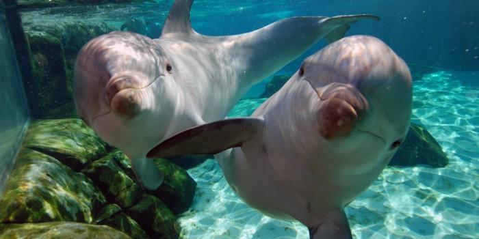 &#8220;Salvemos a los Delfines&#8221;, su<br/> hogar es el océano y no el cautiverio