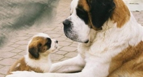 Brasil prohíbe corte de colas en perros