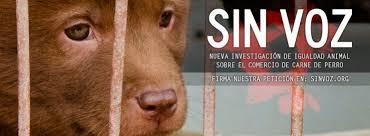 Activistas documentan el maltrato en el comercio de carne de perro en China