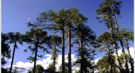 Tras 10 años Corte Suprema ordena a empresa a reparar daño ambiental por destrucción de bosque nativo