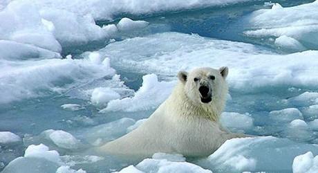 El hombre es el principal<br/> causante del cambio climático