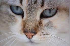 Perú: ante polémica por prohibición de comer carne de gato, piden regular su consumo