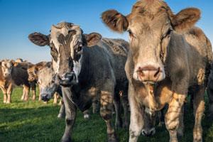 El gas metano producido por EE.UU. es el doble de lo que se pensaba