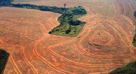 Brasil: Deforestación de la Amazonía aumentó 28% el último año