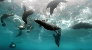 Las espectaculares imágenes de Juan Fernández que invitan a proteger sus aguas
