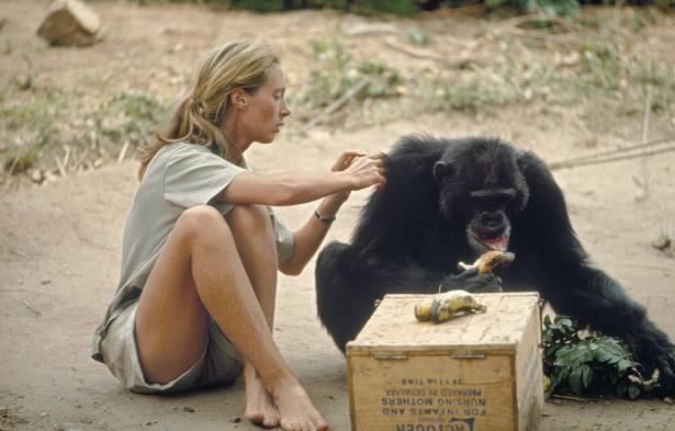 Jane Goodall: la suma de los pequeños cambios