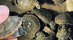 Reino Unido: triste récord de decomisos de especies protegidas