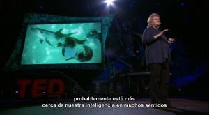 En busca del idioma de los delfines