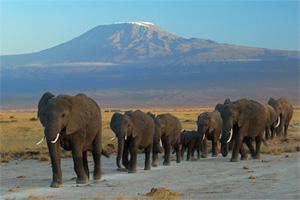 África perdería 20% de sus elefantes en los próximos 10 años