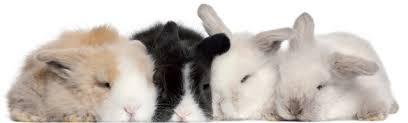 Video que muestra crueldad contra conejos angora detiene venta de su lana