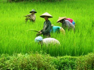 Los productos orgánicos <br/>suman adeptos en China