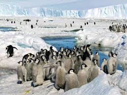 Escépticos del cambio climático festinan con barco atrapado en hielos antárticos