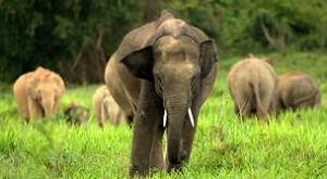 Consejo de Seguridad de ONU sanciona a traficantes de fauna en África