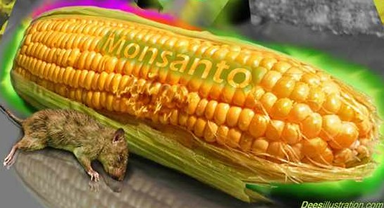 Agricultor chileno gana demanda contra Monsanto