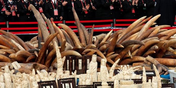China destruye 6.1 toneladas de marfil