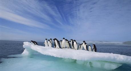 Los pingüinos también sufren por el cambio climático