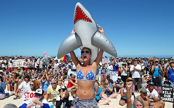 Sea Sheperd cuestiona mandato que permite matar tiburones blancos