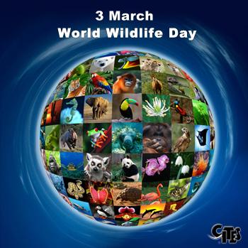 Día Mundial de la Vida Silvestre: las especies se extinguen más rápido de lo natural