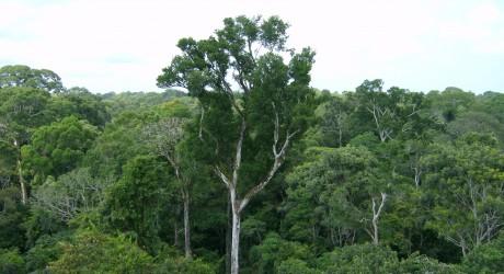 La Amazonía inhala más carbono del que emite
