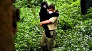 Cinco balazos: el precio por defender gorilas africanos