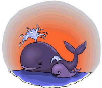 Japón renuncia a cazar ballenas 'antárticas' y portal nipón dejará de vender su carne