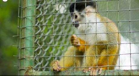 ONG acusa que matanza de animales sanos en los zoológicos es una práctica habitual