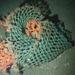 Corales atrapados en red de carga, a 950 metros.