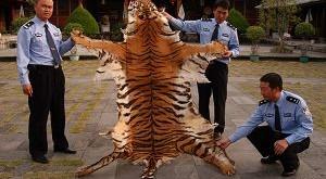 China: Hasta 10 años de cárcel por comer animales en peligro