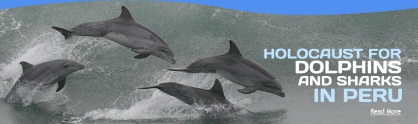 Campaña internacional busca detener matanza de delfines en Perú