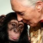 Goodall: una vida dedicada a defender a los primates.
