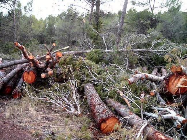 La tala ilegal de bosque nativo que deja sin agua a Chiloé
