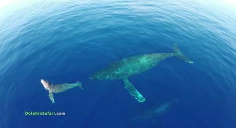 Video: bellísimo avistamiento de delfines