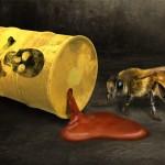 Desaparción de las abejas está vinculada al uso de neonicotinoides.