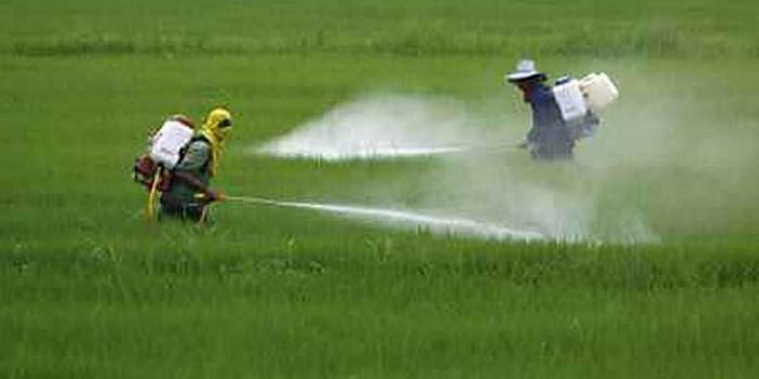Uso masivo de insecticidas pone en riesgo producción de alimentos