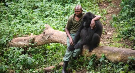 Petrolera anuncia retiro de Parque Nacional Virunga en África