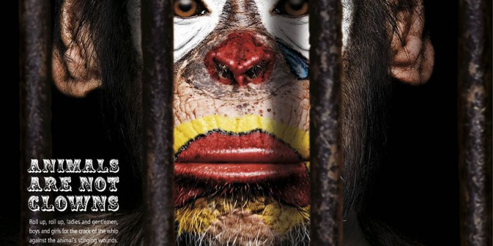 Circo sin animales: tendencia al alza