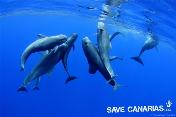 Piden santuario de ballenas en vez de extracción de crudo