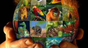 El lento sendero contra el comercio de animales
