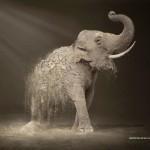 elefantedesertificaciónAVISO
