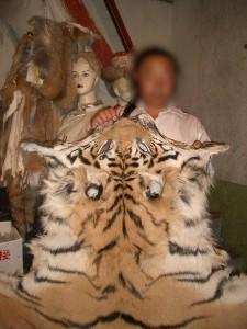 En estado salvaje no quedan más de 3.200 tigres.