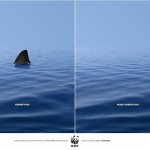tiburonesAVISO