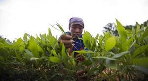 805 millones de seres humanos padecen hambre