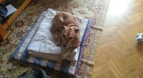 Un perro madrileño, la primera víctima canina del Ébola