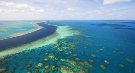 """Científicos en picada contra plan de gobierno que pretende """"salvar"""" Gran Barrera de Coral"""