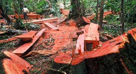 "La tala ilegal de la selva amazónica no es un problema ""indígena"""