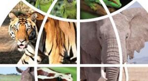 La macabra oferta web: 33 mil animales o partes de ellos a la venta online