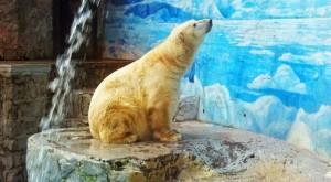 ¿Quién defiende a 'Taco', el oso polar chileno?