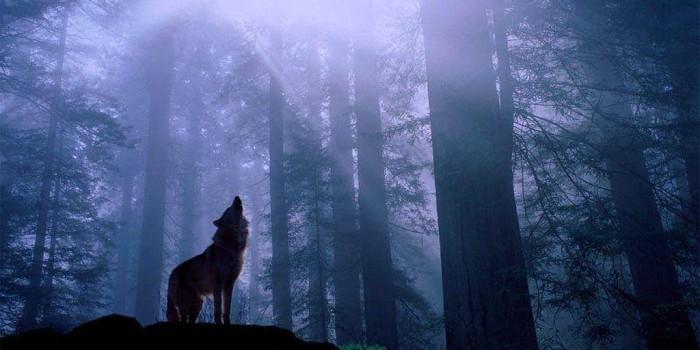 Contra todo pronóstico: osos pardos, lobos y linces aumentan en Europa