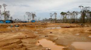 La fiebre del oro arrasa <br/>los bosques sudamericanos